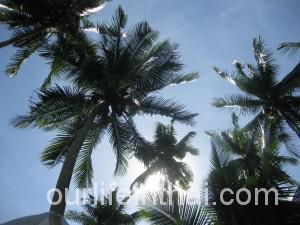 Пальмы Ко-Куд